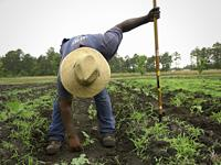 farmer working